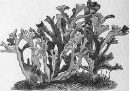 лечебные свойства моха
