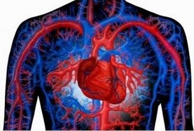 Влияние Кардиомагнила на сердце