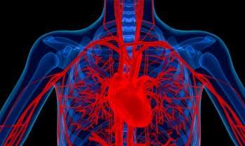 влияние препаратов на кровеносную систему