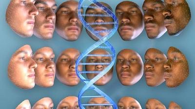 Внешний вид человека определяют гены